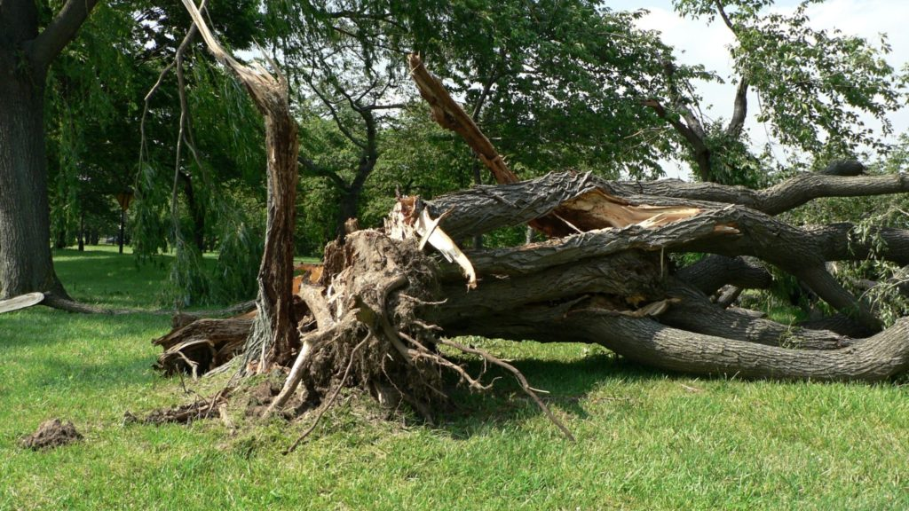 How To Identify Hazardous Trees on Your Commercial Property