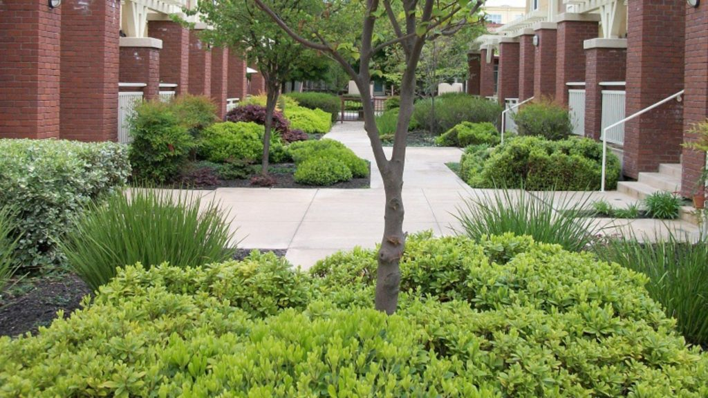 What to Consider When Planning an HOA Landscape